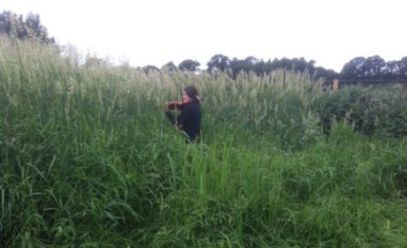 Emma listening to the tall grass crop